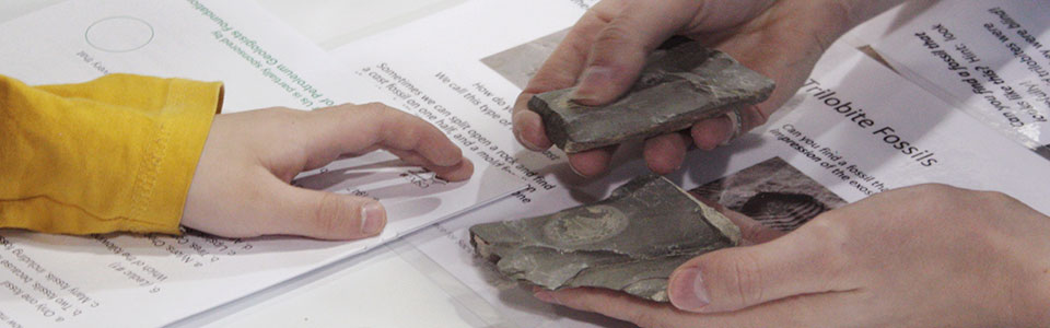 An adult's hand holding Trilobite Fossils to show to a younger student.